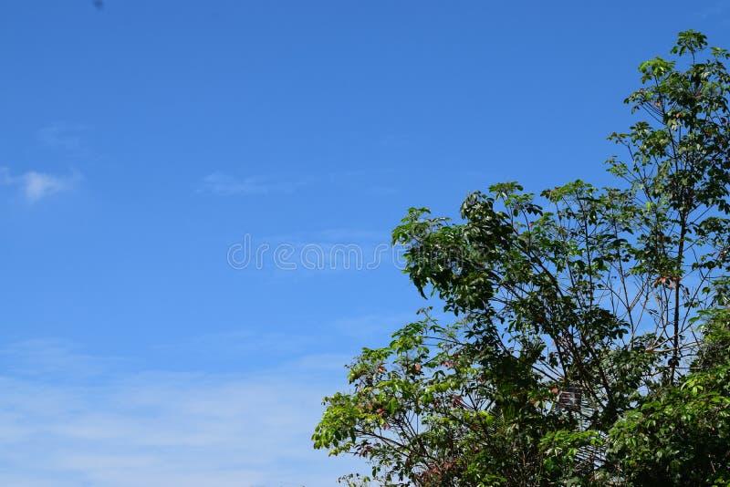 Arbre et ciel bleu, photo libre de droits