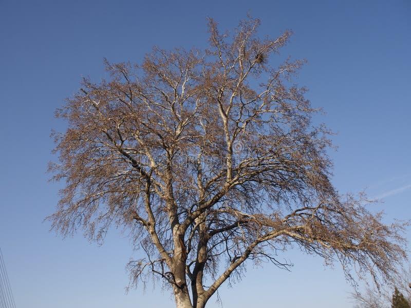 Arbre et ciel bleu photographie stock