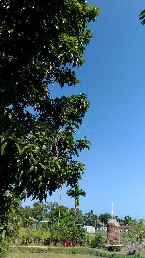 Arbre et ciel côte à côte image libre de droits
