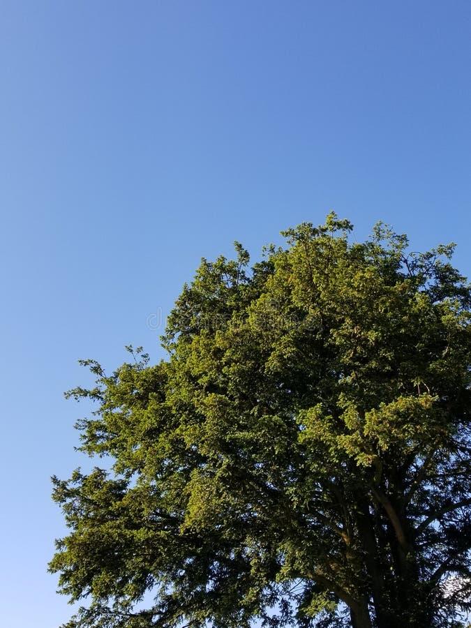 Arbre et ciel sans nuages, Irlande photographie stock