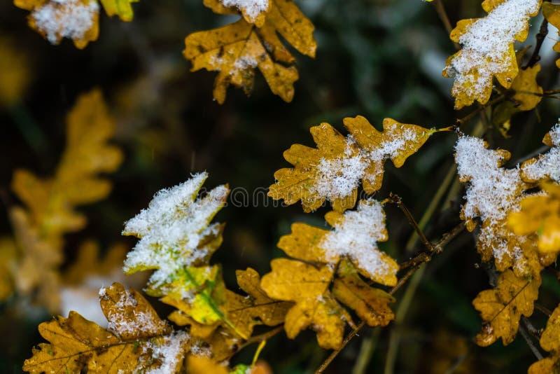 Arbre et feuilles couverts dans la neige en hiver photographie stock