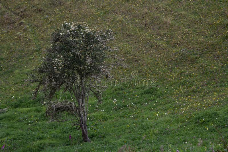 Arbre et herbe photo libre de droits