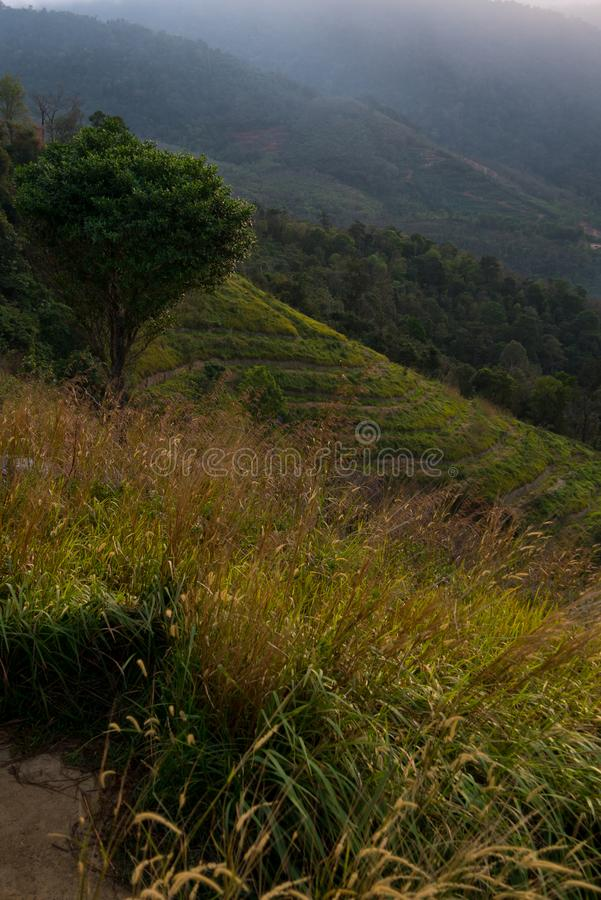 Arbre et herbe par lever de soleil, Malaisie images libres de droits