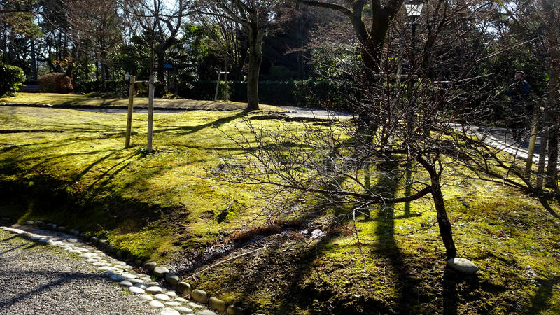 Arbre et herbes chez Meijimura photos stock