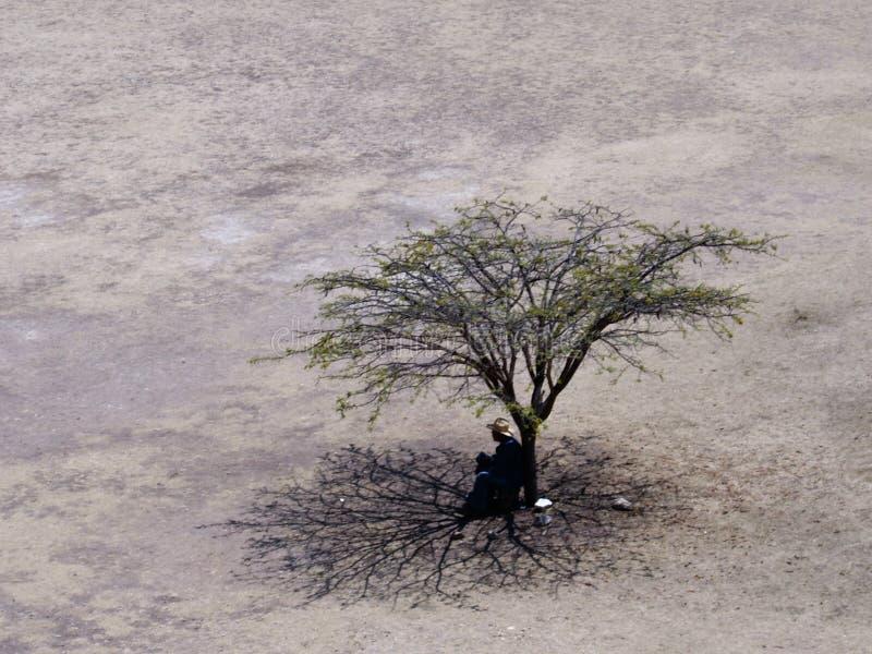 Arbre et homme en plaine de désert photo stock