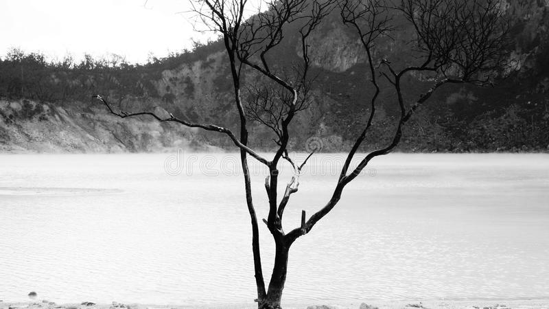Arbre et lac mortels photo stock