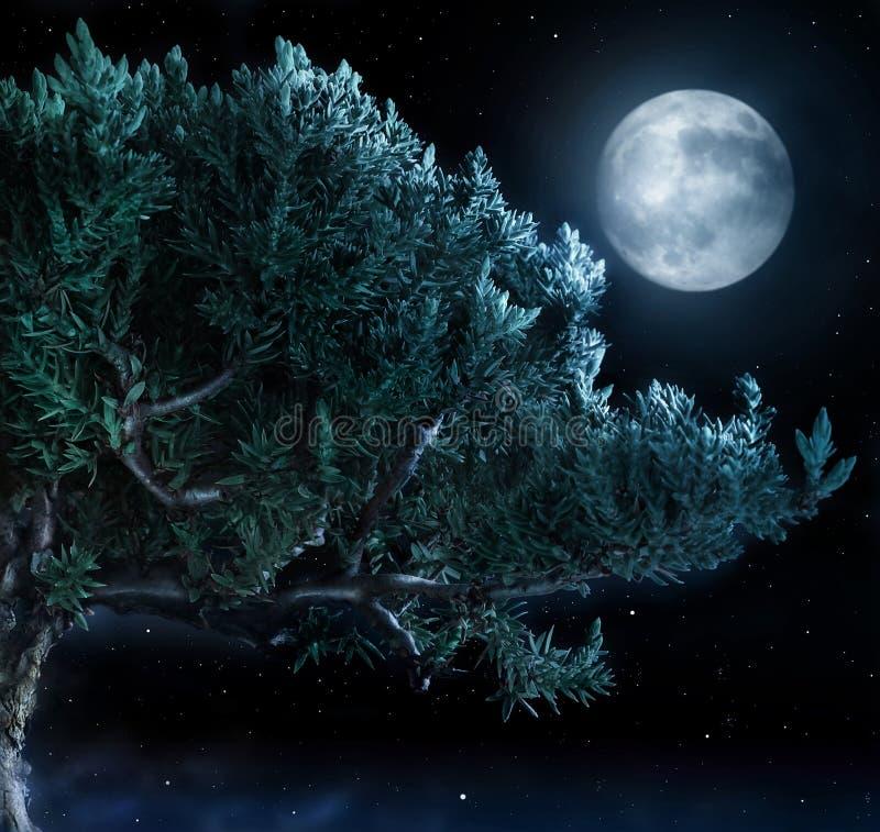 Arbre et lune photos libres de droits
