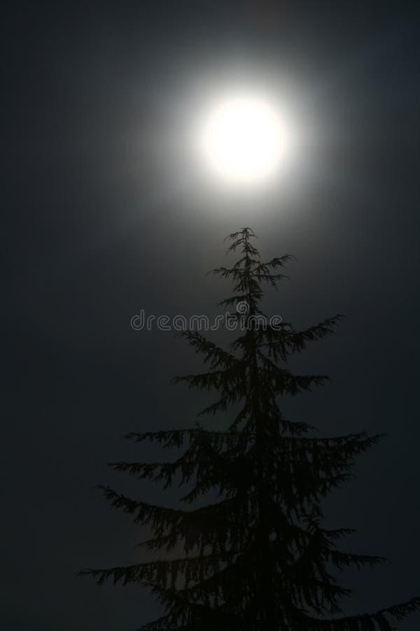 Arbre et lune photos stock