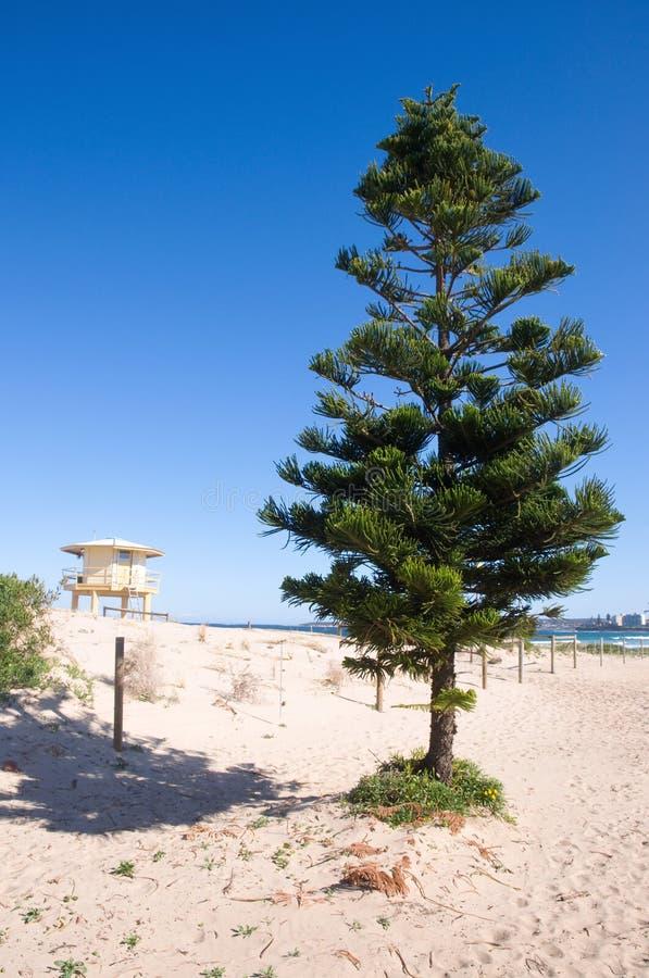 Arbre et mirador de durée sur une plage photographie stock