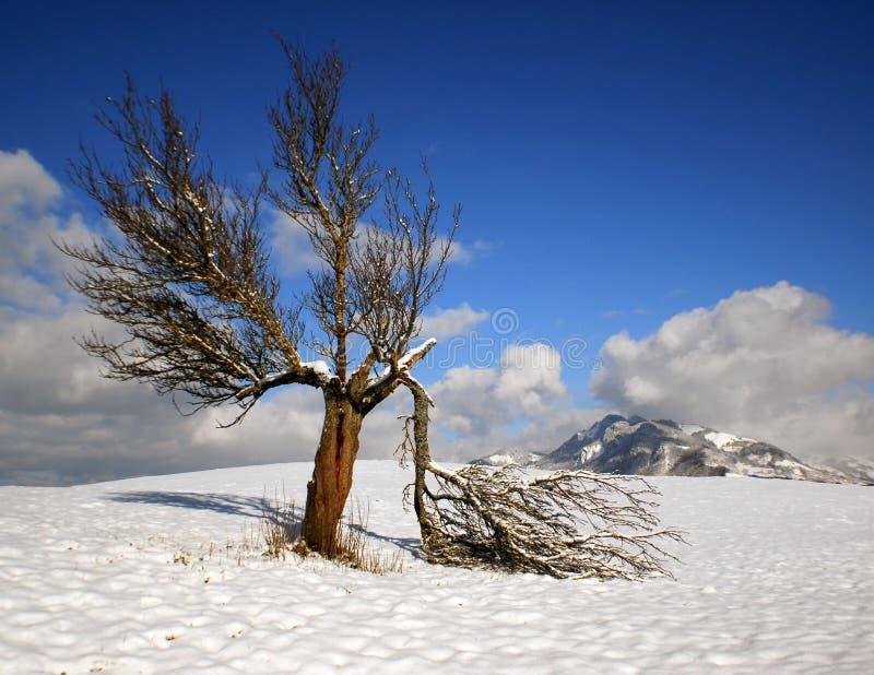 Arbre et neige photo stock