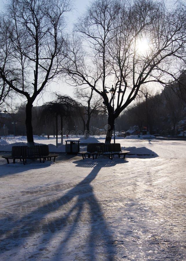Arbre et ombre secs d'hiver photographie stock libre de droits