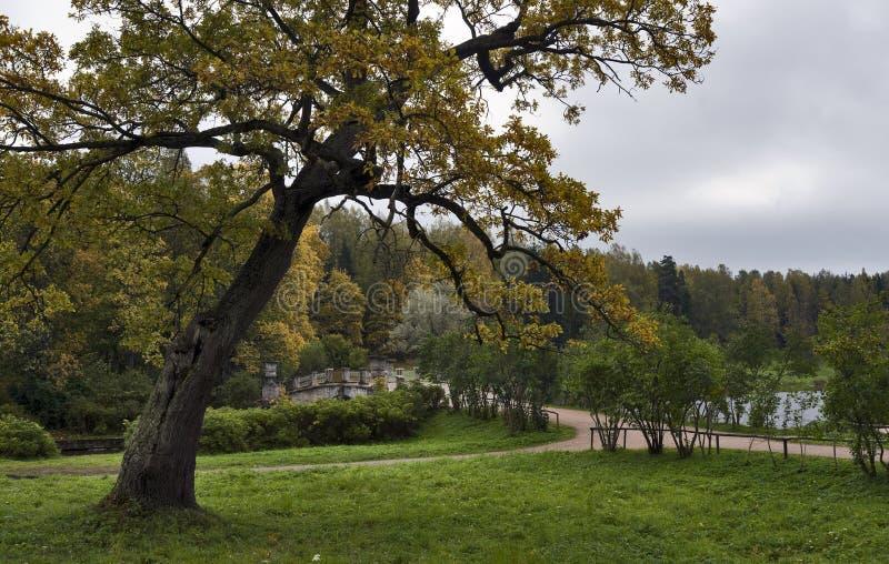 Arbre et passerelle de chêne d'automne image stock