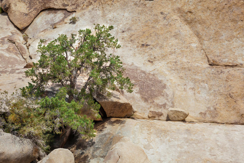 Arbre et rochers image stock