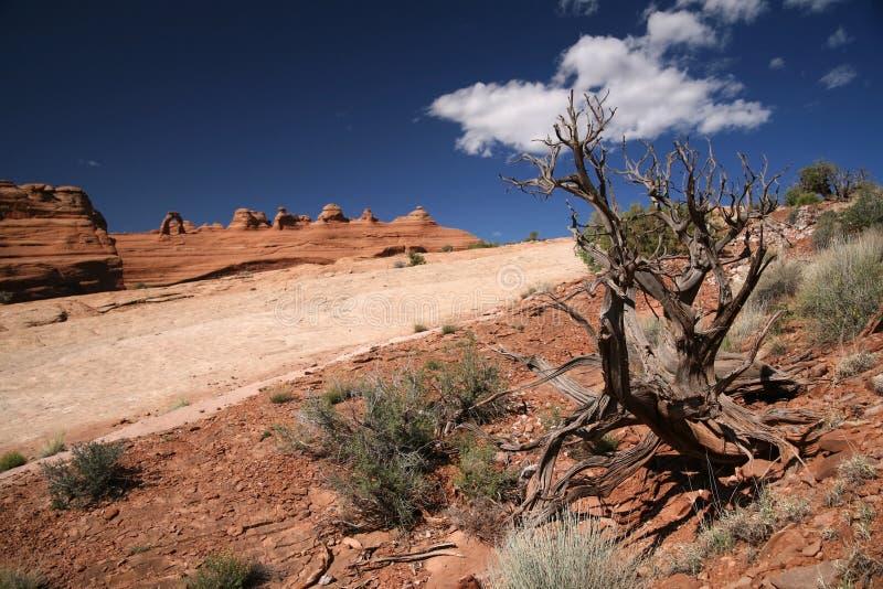 Arbre et roches morts, voûtes stationnement national, Etats-Unis photo libre de droits