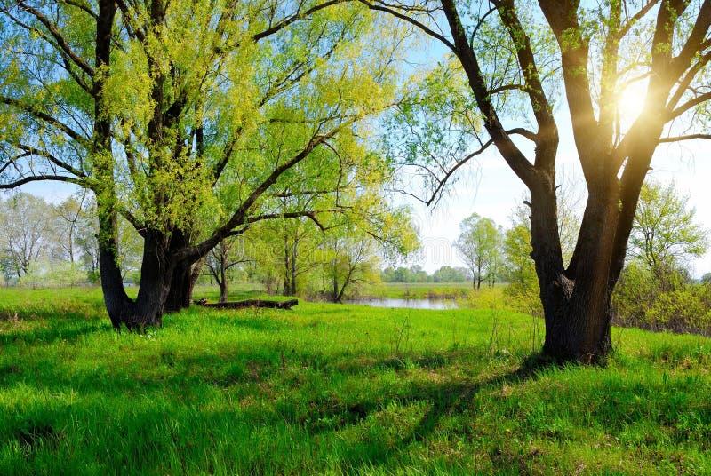 Arbre et soleil verts de source photographie stock