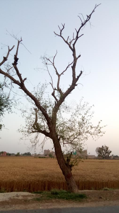 Arbre et terres de nature de geenpunjab photographie stock libre de droits