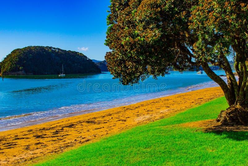 Arbre faisant face à la mer dans la baie des îles Paihia, Nouvelle-Zélande images stock