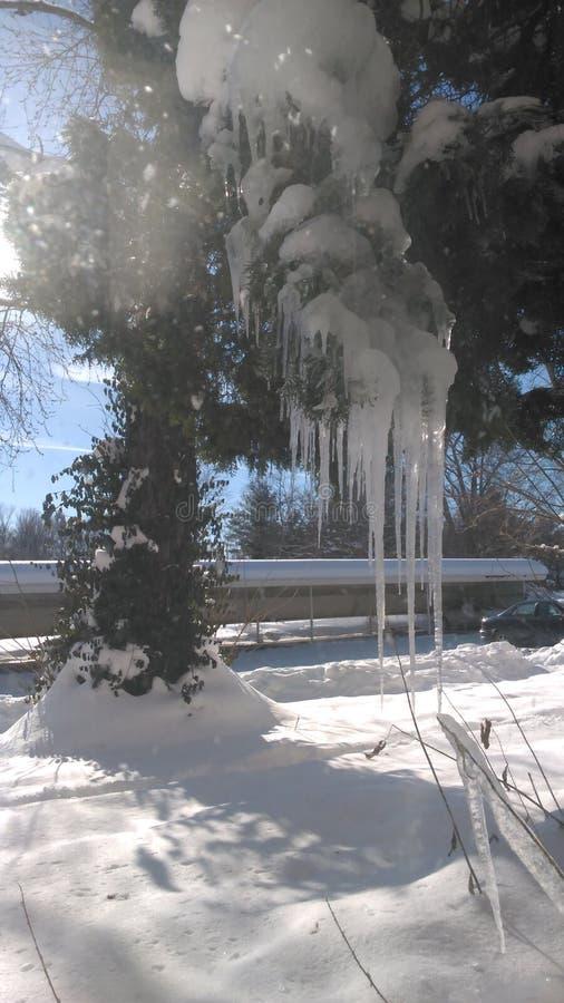 Arbre fait de glace photo stock