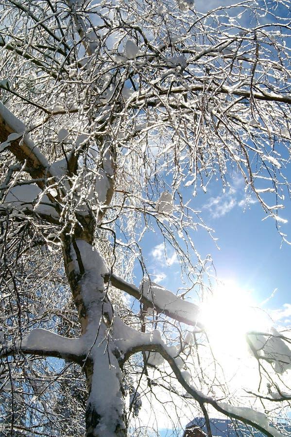 arbre figé photo libre de droits