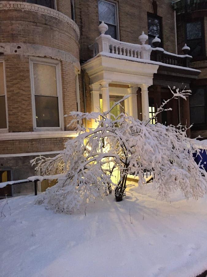 arbre figé photographie stock