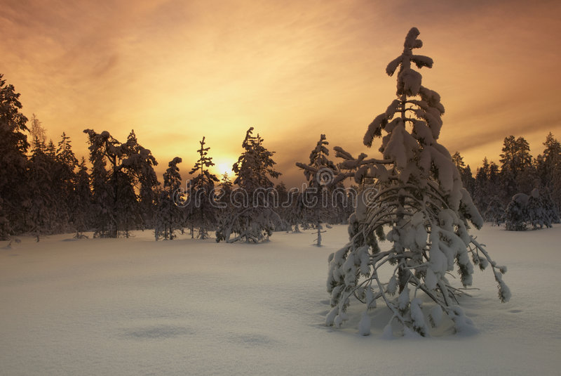 arbre filtred d'horizontal hivernal images libres de droits