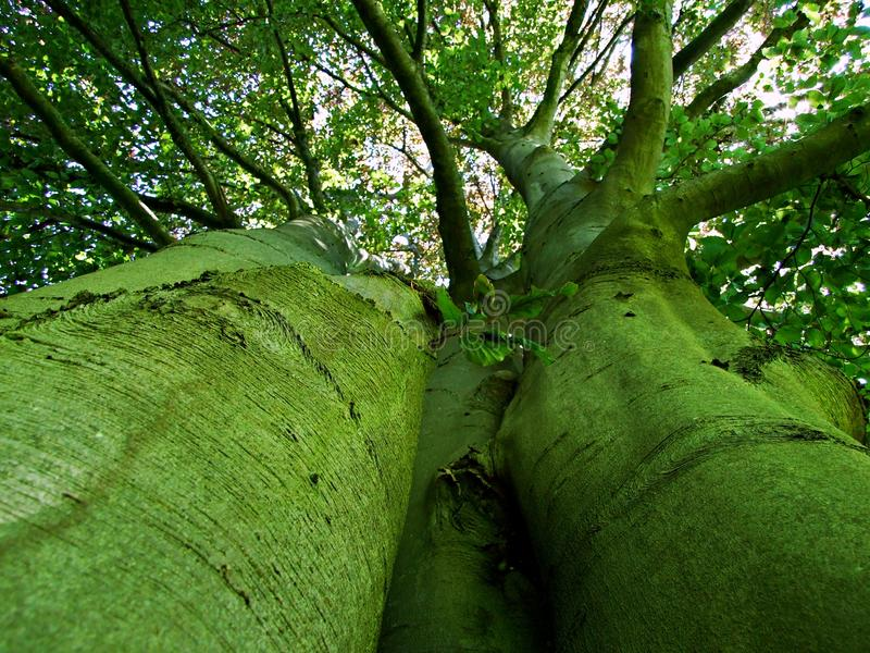 arbre, forêt, nature, vert, parc, arbres, paysage, ressort, chemin, été, herbe, bois, feuilles, feuillage, usine, dehors, chêne image libre de droits