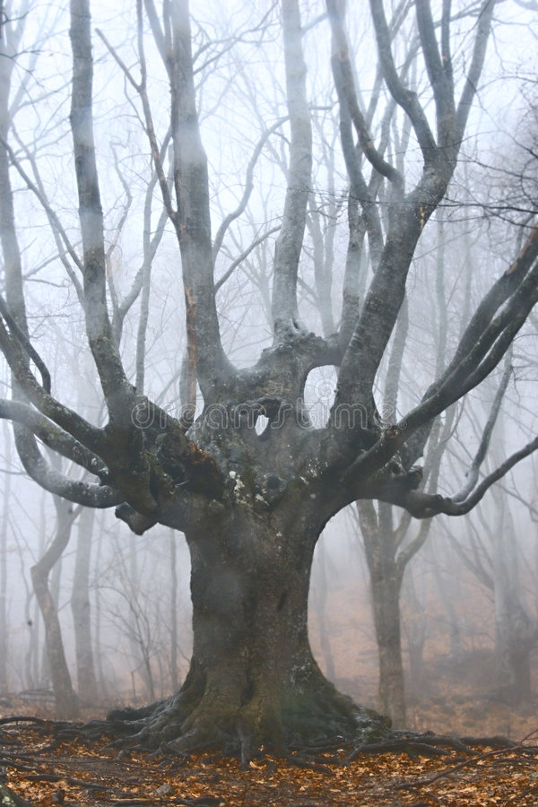 arbre forestier brumeux mort photo stock
