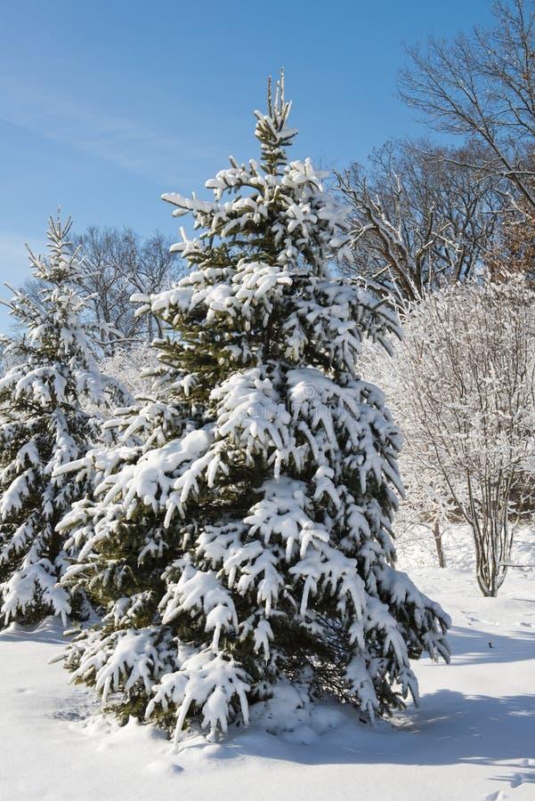 Arbre forestier de l'hiver couvert dans la neige image libre de droits