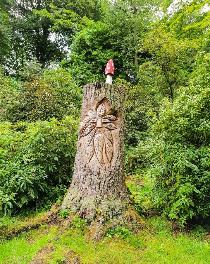 Arbre forestier gravé avec le dessus de champignon de champignon images libres de droits