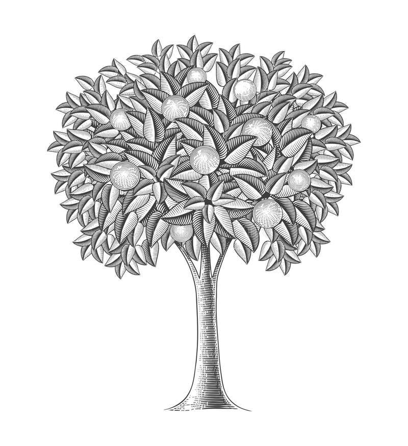 Arbre fruitier dans le style de gravure illustration libre de droits