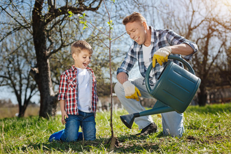 Arbre fruitier de versement enthousiaste de père et de fils dans le jardin image stock