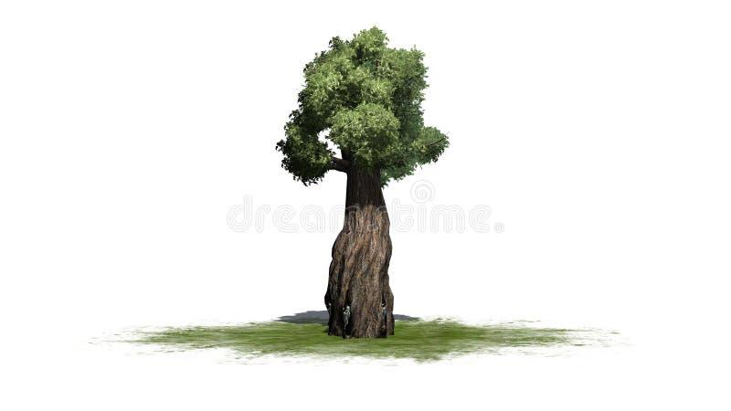Arbre géant de séquoia illustration libre de droits