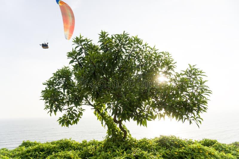 Arbre gentil avec le parapentisme dans Miraflores, Pérou photo stock