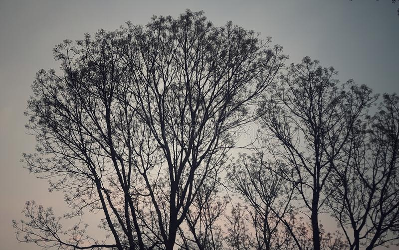 arbre gentil et ciel rouge au crépuscule images stock