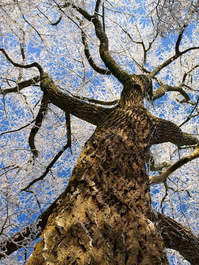 arbre givré images stock