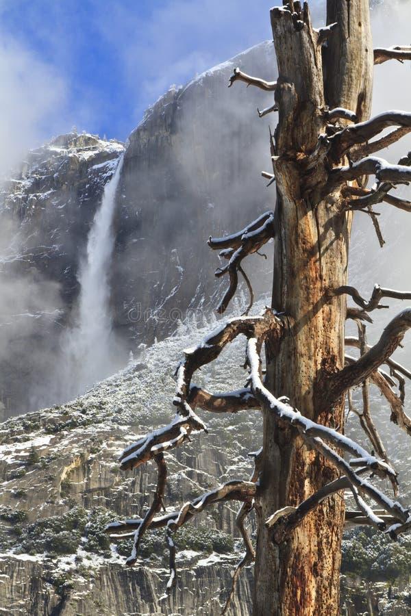 Arbre Gnarly et Yosemite Falls supérieur images libres de droits
