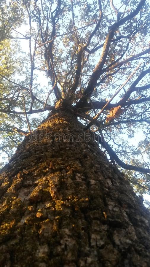 Arbre grand images libres de droits