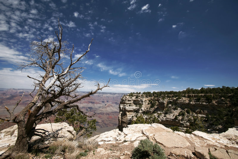 arbre grand mort de gorge de l'Arizona image libre de droits