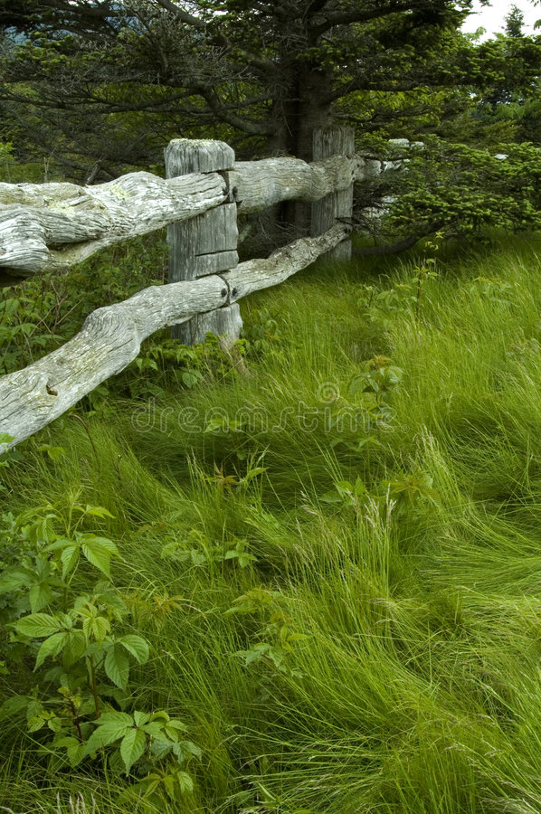 Arbre, herbe, frontière de sécurité en bois photographie stock