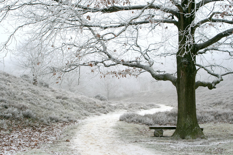 Arbre hivernal brumeux d'horizontal et de chêne photo libre de droits