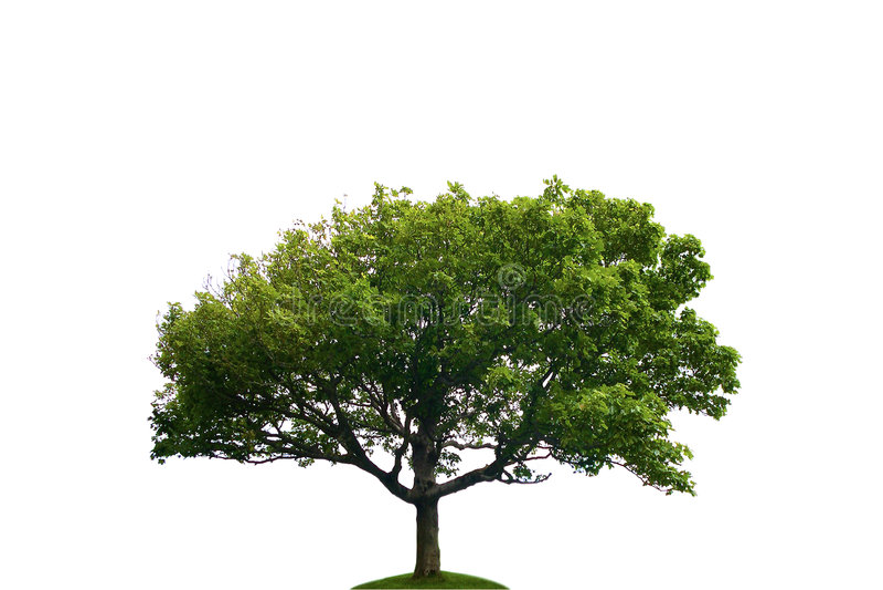 arbre isolé image libre de droits
