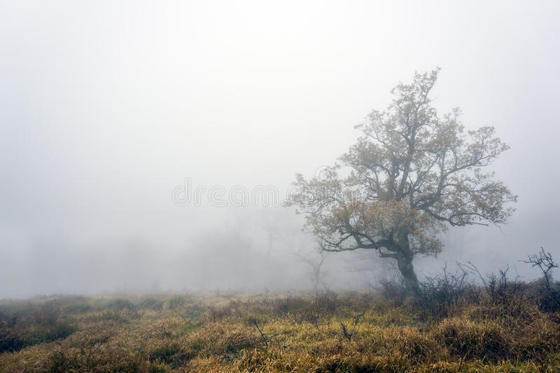 Arbre isolé avec le brouillard images libres de droits