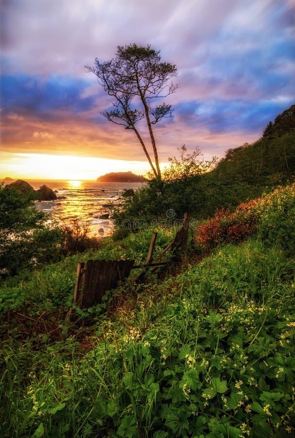 Arbre isolé, coucher du soleil de paysage marin en Californie du nord images stock