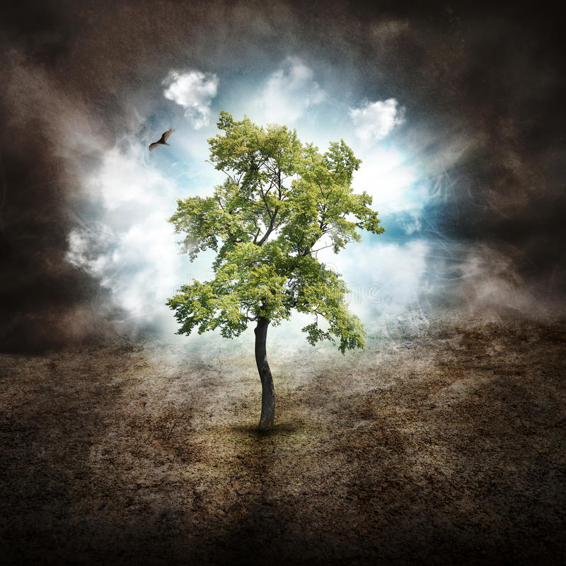 Arbre isolé d'espoir sur la terre sèche illustration stock