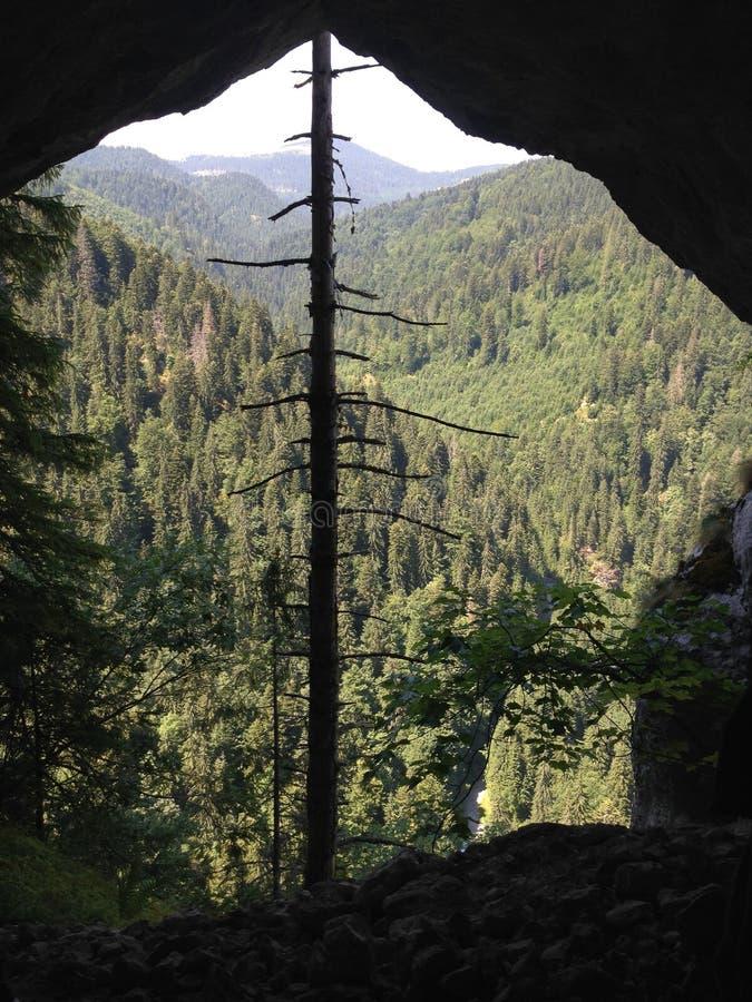 Arbre isolé dans la forêt photos stock