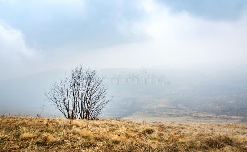 Arbre isolé dans la montagne brumeuse image stock