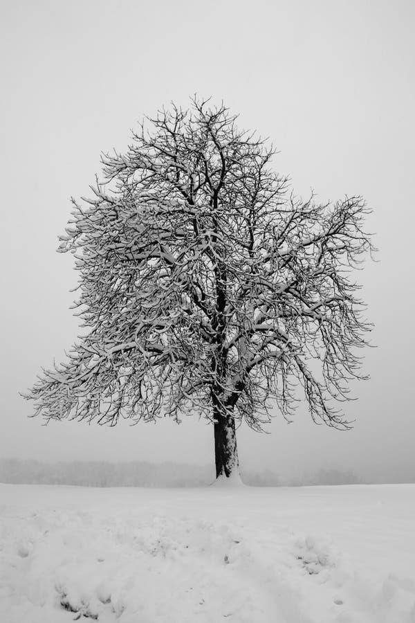 Arbre isolé dans la neige photo stock