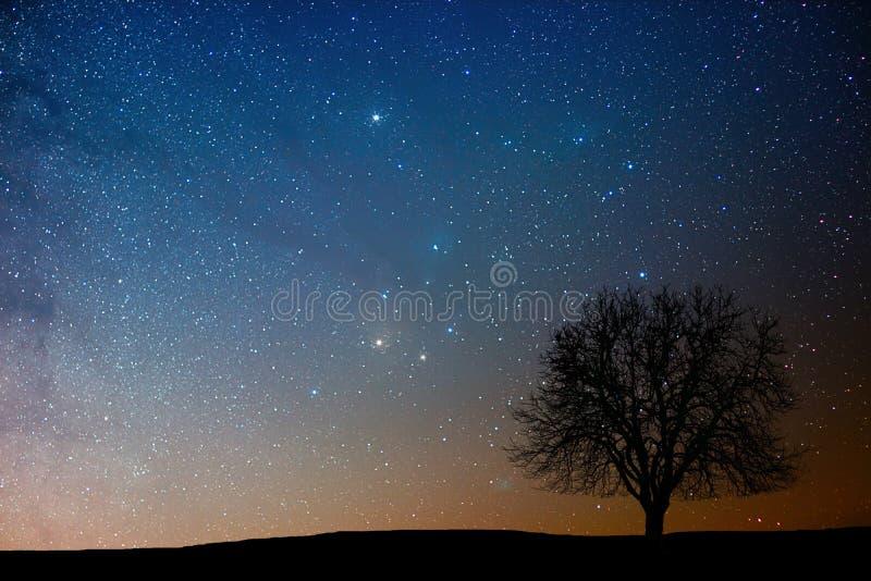 Arbre isolé dans la nuit étoilée Région d'Antares images libres de droits