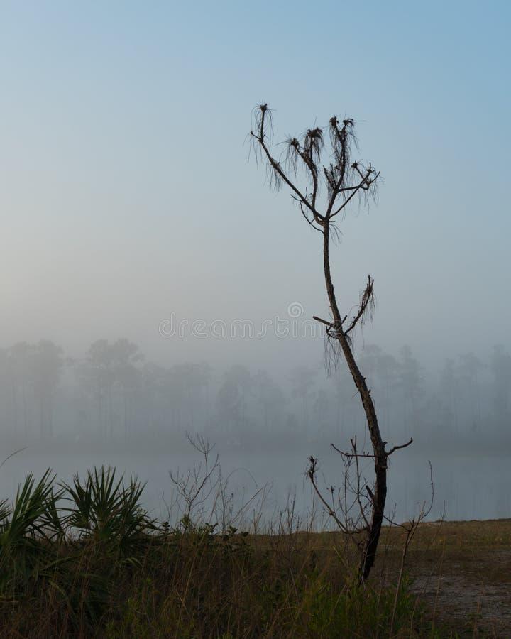 Arbre isolé dans le brouillard photographie stock