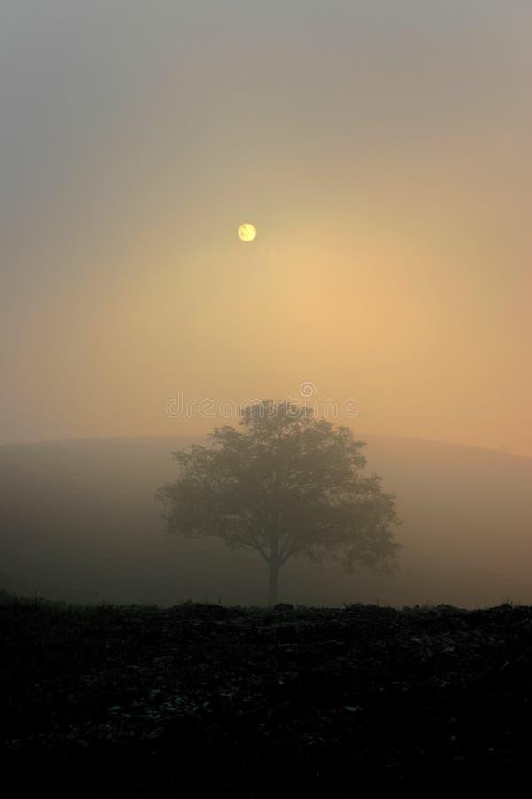Arbre isolé dans le coucher du soleil brumeux photos libres de droits